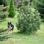 Sonia - dba o bezpieczeństwo Wzgórza Poręby